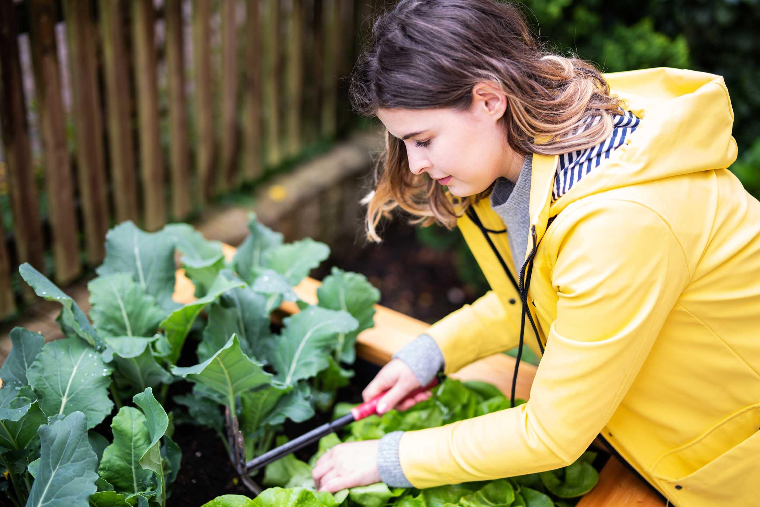 Cover for article 'CircularHoodFood kehittää ruoantuotantoa kaupunkiympäristössä'